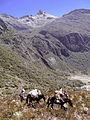 Pico Bolìvar, Venezuela (12679841483).jpg