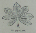 Picture Natural History - No 324 - Leaf.png