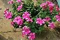 Pink paper flower.jpg