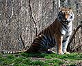 Pittsburgh Zoo (4509208219).jpg