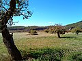 Pla d'Albarca - panoramio.jpg