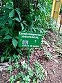 Plaque indiquant l'arbre du voyageur au Jardin des Plantes et de la Nature.jpg