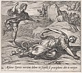Plate 111- Aesacus and Hespeia (Aesacus Eperies mortem dolens ex scopulo se praecipitans abit in mergum), from Ovid's 'Metamorphoses' MET DP866558.jpg