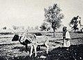 Ploughing in Judea.jpg
