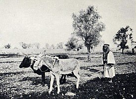 Ploughing in Judea