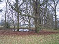Pond, Brockhampton Park - geograph.org.uk - 117109.jpg