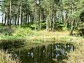 Pond in Turflundie Wood - geograph.org.uk - 430572.jpg
