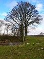 Pond near Oak Wood - geograph.org.uk - 344429.jpg