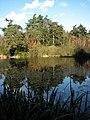 Pond reflections - geograph.org.uk - 617164.jpg