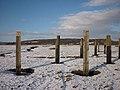 Posts on the saltmarsh, Warton Sands - geograph.org.uk - 1658558.jpg