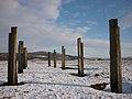 Posts on the saltmarsh, Warton Sands - geograph.org.uk - 1658566.jpg