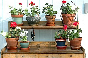 The flowers on my potting bench.