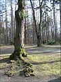 Praha - obora Hvezda - kmen stromu 3.jpg