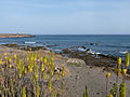 Praia-Aloe vera.jpg