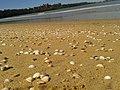 Praia de Camburi e Porto de tubarão Vitória,E.S.jpg