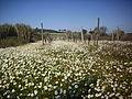 Primavera I.jpg