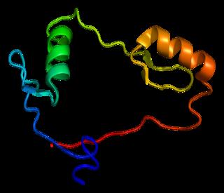 CTCF Transcription factor for transcriptional regulation, insulator activity, and regulation of chromatin architecture