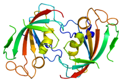 Protein FKBP4 PDB 1n1a.png