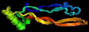 GDF5, involved in skeletal development