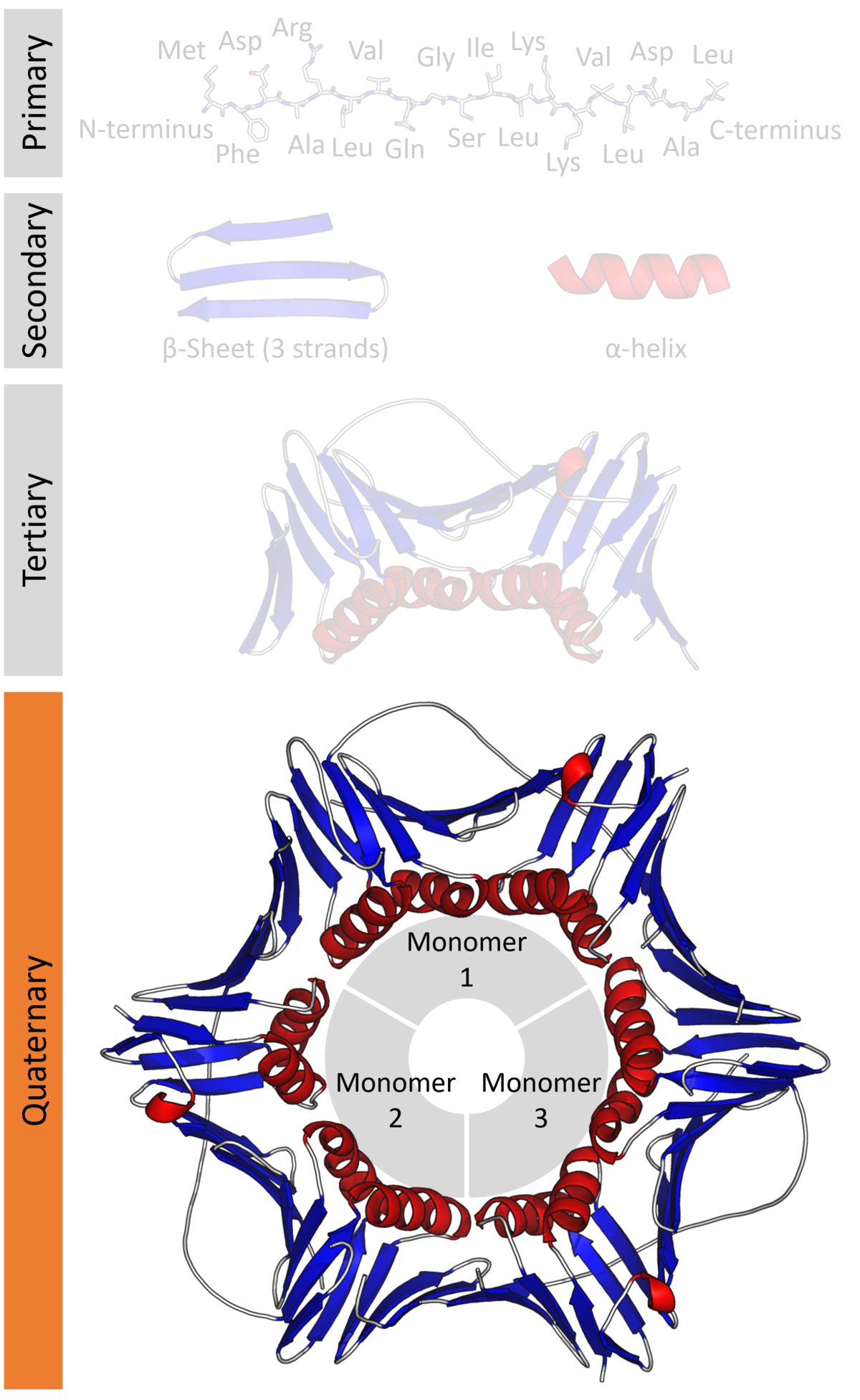 Protein Quaternary Structure