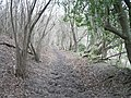 Pyecombe, Wolstonbury Hill bridleway - geograph.org.uk - 643932.jpg