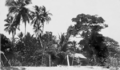 Queensland State Archives 5858 Darnley Island 20 July 1911.png