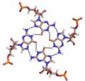 RNA Quadruplex.png