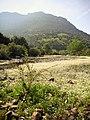 Ranunculus fluitans RioMontoro.jpg