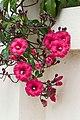 Red Flowers-03+ (345832551).jpg