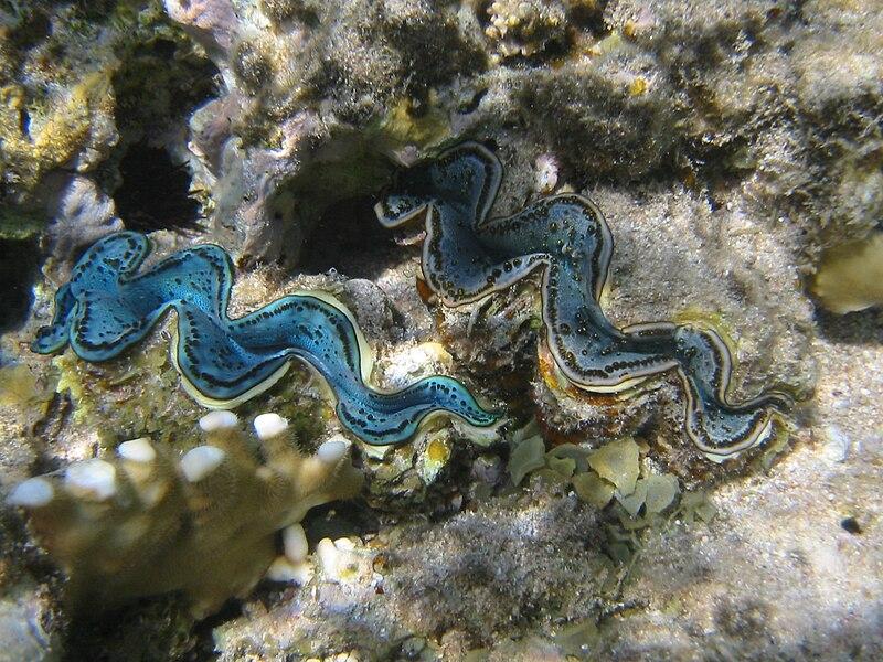 File:Red sea-reef 3603.jpg