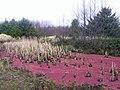 Red stuff in the wetland.jpg