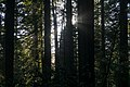 Redwood National and State Parks 2019-09-26-2.jpg