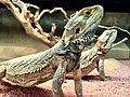Reptile (64200675).jpeg