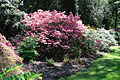 Rhododendronpark Bremen 20090513 050.JPG