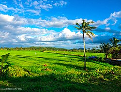 Rice field in Pagsulhugon, Babatngon