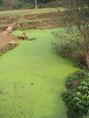 Algal blooms can present problems for ecosystems and human society