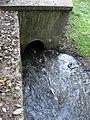 Rokytka vytéká z Kyjského rybníka.jpg