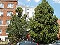 Roosevelt Apartment Building DC.jpg
