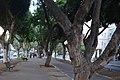 Rothschild Boulevard, Tel Aviv.jpg