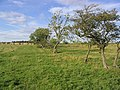 Rough grazing and trees to the west of Shilvington - geograph.org.uk - 547519.jpg