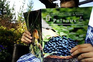 Poles in Romania - Image: Rum Polo