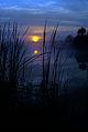 SUN sunrise in palms NPSPhoto, Van Nimwegen, Dec 75 (2) (9255143923).jpg