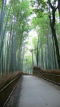 Sagano Bamboo Forest 01.jpg