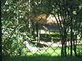 Sagittarius serpentarius in Burgers' Zoo (Park).JPG