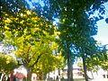 Saint-Chamond (Loire), jardin public, septembre 2014.jpg