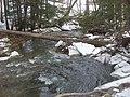 Salt Springs State Park (3283872497).jpg
