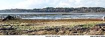 Saltmarsh and Mudflats - Grays Harbor National Wildlife Refuge.jpg