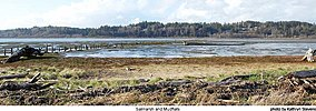 Saltmarsh and Mudflats - Grays Harbor National Wildlife Refuge.jpg