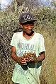 San-Mann beim Sammeln der Teufelskralle (Namibia).jpg