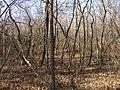 Schepkinsky Forest thicket.jpg